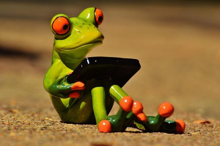 frog-881660_960_720