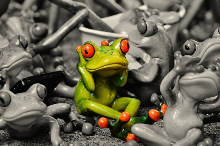 frogs-1413727_960_720