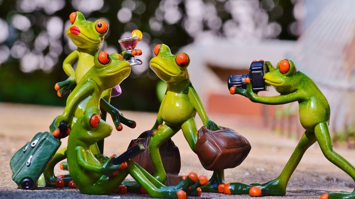 frogs-897981_960_720
